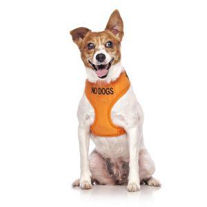FriendlyDog No Dog Vest Harness
